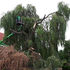 Baumfällung nach Sturmschaden